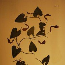 Arte: BOTÁNICA.PLANTAS.FLORES.. Lote 23175463