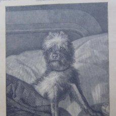 Arte: HOLA. AQUI HAY RATAS. XILOGRAFIA ORIGINAL DE 1885 . Lote 25732648