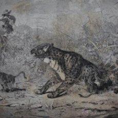 Arte: ARGELIA CAZA DE LA PANTERA .AÑO 1871. Lote 45275782