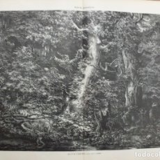 Arte: XILOGRAFIA: SELVA VIRGEN. ILUSTRACION ARTISTICA G-ILUSESP-046. Lote 179954825