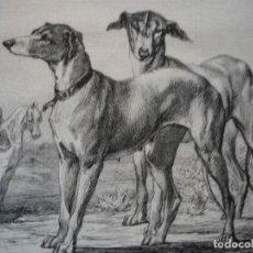 Arte: LEBRELES DE CAZA .AÑO 1872.BUENA IMPRESION. Lote 242447250
