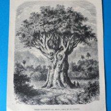 Arte: XILOGRAFÍA. ISLAS CANARIAS. EL DRAGO EN LA OROTAVA. Lote 253191440