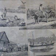 Arte: ISLAS FILIPINAS CULTIVO Y RECOLECCION DEL TABACO EN CAGAYAN GRABADO XILOGRÁFICO XILOGRAFÍA 1874. Lote 254724390