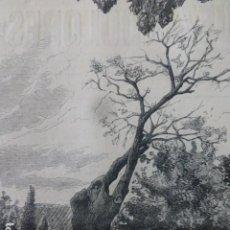 Arte: BILBAO ROBLE DE ARBIETO EN ABANDO GRABADO XILOGRÁFICO XILOGRAFÍA 1880. Lote 255947750