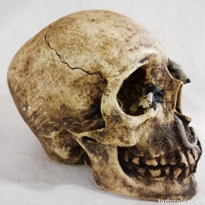 Artesanía: CALAVERA MOSCA Y RATA de 16 x 12 cm en polvo de alabastro - Foto 2 - 156775728