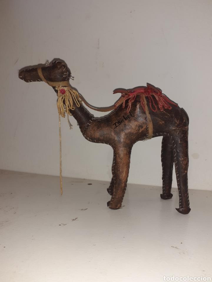 Artesanía: Camello o dromedario africano de piel - Foto 2 - 195173300