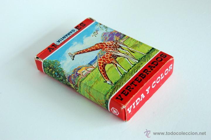 Barajas de cartas: Antigua Baraja infantil de Fournier. Animales Vertebrados. Vida y Color. 1968 - Foto 5 - 43544392