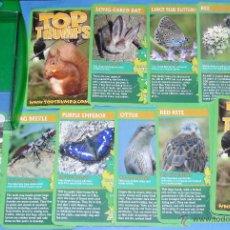 Barajas de cartas: BARAJA DE CARTAS INFANTIL. TOP TRUMPS. ANIMALES. ARDILLA, ABEJA, MURCIELAGO, NUTRIA, FOCA, TIBURÓN. Lote 49118277