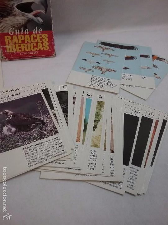 Barajas de cartas: BARAJA DE CARTAS GUIA DE RAPACES IBÉRICAS - POR J.L. RODRÍGUEZ - NATURA - COMPLETA - Foto 3 - 57994446