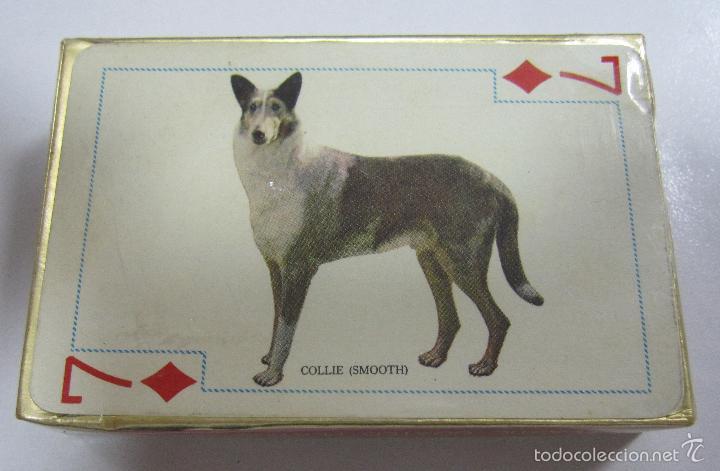 Barajas de cartas: BARAJA DE CARTAS. FAMOUS DOGS OF THE WORLD. POKER. RAZAS DE PERROS. Nº 909. PRECINTADA - Foto 2 - 58492437