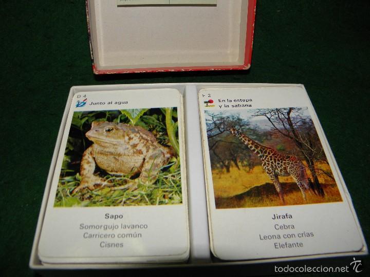 Barajas de cartas: BARAJA EL CUARTETO DEL ZOO DE EDUCA - Foto 3 - 60534823
