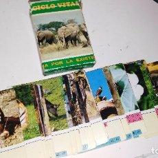 Barajas de cartas: BARAJA DE CARTAS FOURNIER CICLO VITAL,EL JUEGO DE LA LUCHA POR LA EXISTENCIA .SIN INSTRUCCIONES. Lote 82848508