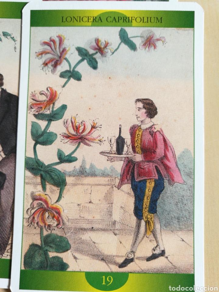 Barajas de cartas: Oráculo-Tarot de la Madre Naturaleza - Foto 4 - 114611692