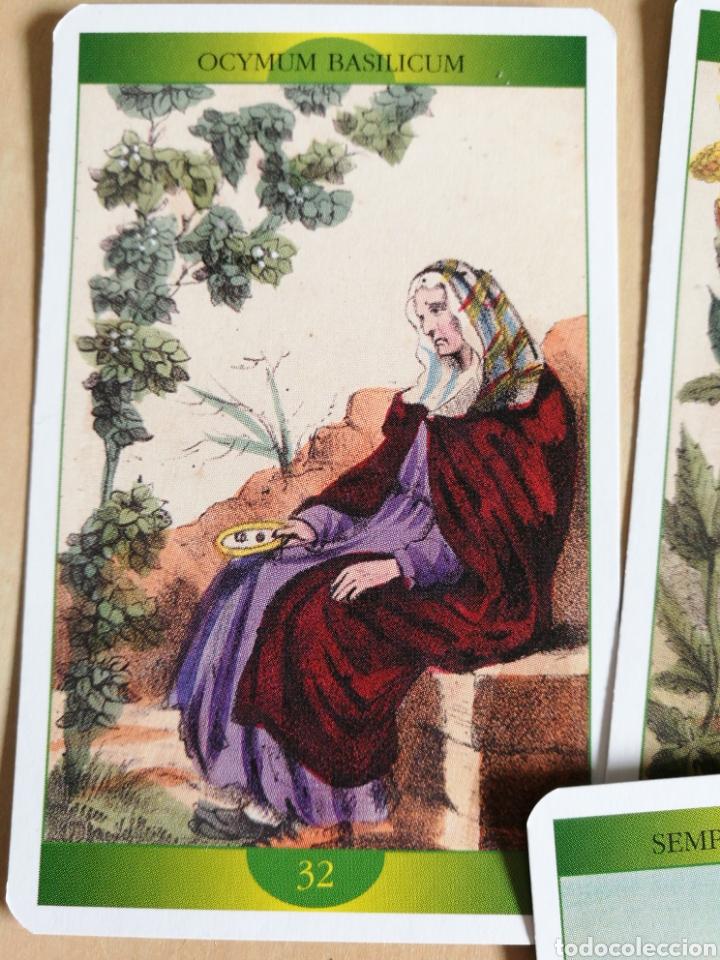 Barajas de cartas: Oráculo-Tarot de la Madre Naturaleza - Foto 5 - 114611692