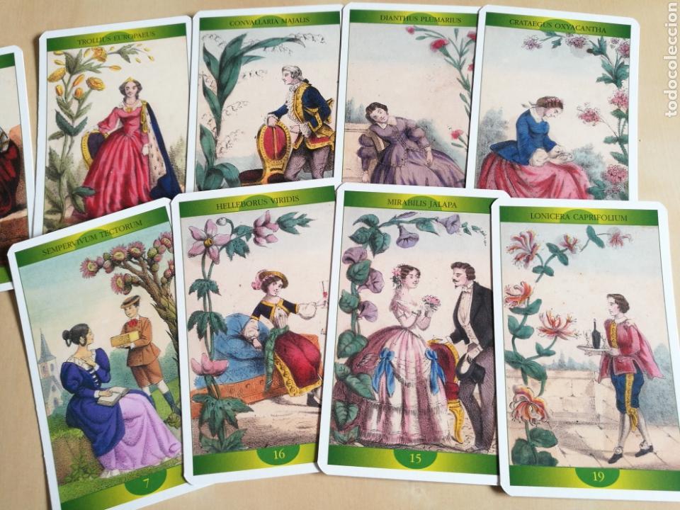 Barajas de cartas: Oráculo-Tarot de la Madre Naturaleza - Foto 3 - 114611692