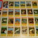 Barajas de cartas: BARAJA DE CARTAS INFANTIL. CUARTETOS. CABALLOS Y PONYS. ALEMANIA. 70 GR. Lote 159684670