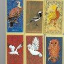 Barajas de cartas: CARTAS DE BARAJA DE TAROT DE LO PAJAROS 52 CARTAS EN BUEN ESTADO. Lote 168958792