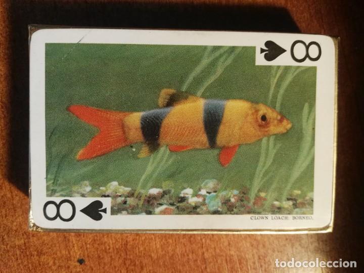 Barajas de cartas: BARAJA CARTAS DE PÓKER. LOS PECES TROPICALES, 54 IMÁGENES tropical fishes nueva precintada - Foto 2 - 193449260