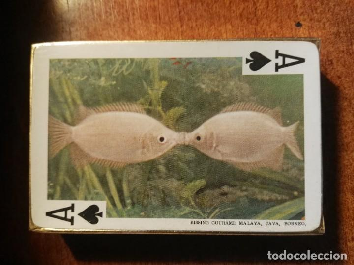 Barajas de cartas: BARAJA CARTAS DE PÓKER. LOS PECES TROPICALES, 54 IMÁGENES tropical fishes nueva precintada - Foto 2 - 193449281