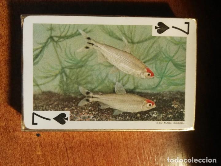 Barajas de cartas: BARAJA CARTAS DE PÓKER. LOS PECES TROPICALES, 54 IMÁGENES tropical fishes nueva precintada - Foto 2 - 193449292