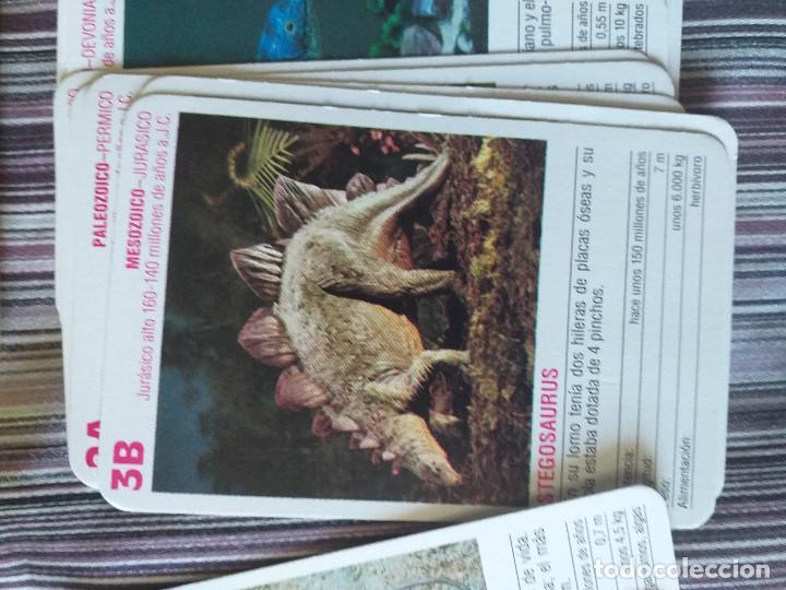 Barajas de cartas: BARAJA DE CARTAS DINOSAURIOS Y ANIMALES PREHISTÓRICOS, ED- SAFARI LIMITED, COMPLETA - Foto 4 - 205119371