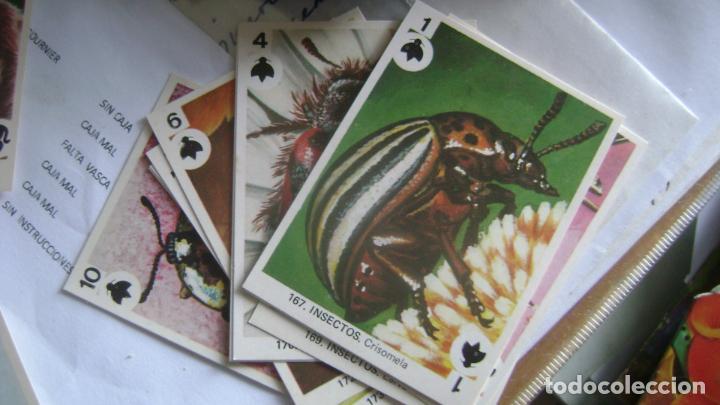 Barajas de cartas: BARAJAS DE LA COLECCION completa DE FAMILIAS DE MAGA VER FOTOS Y DESCRIPCION - Foto 11 - 207129138