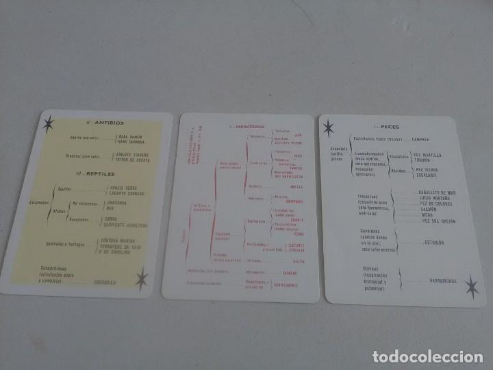 Barajas de cartas: BARAJA DE CARTAS .H,FOURNIER,VICTORIA,1968.ANIMALES VERTEBRADOS.,SIN USAR.55 CART - Foto 5 - 218506471