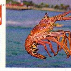 Coleccionismo Calendarios: CALENDARIO DE BOLSILLO DE CARIBBEAN QUEEN.. Lote 902490