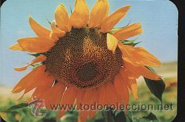 CALENDARIO TEMA FLORES 2002 (Coleccionismo - Calendarios)