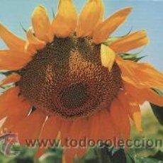Coleccionismo Calendarios: CALENDARIO TEMA FLORES 2002. Lote 13498418