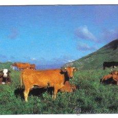 Coleccionismo Calendarios: CALENDARIO DE BOLSILLO 1996. AITZGORRI TABERNA. ARAIA (ALAVA). Lote 24974978