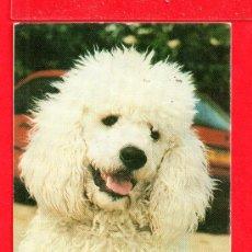 Coleccionismo Calendarios: CALENDARIO DEL AÑO 1994 PUBICIDAD EXTRANJERO . Lote 26721744