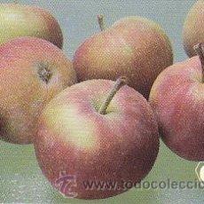 Coleccionismo Calendarios: CALENDARIO DE CHECOSLOVAQUIA (ESLOVAQUIA) DE 1989 TEMA FRUTAS. Lote 29023022
