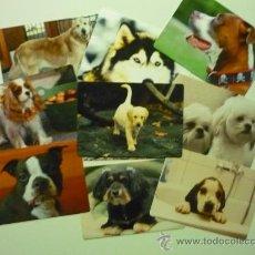 Coleccionismo Calendarios: LOTE CALENDARIOS PERROS 2010 EXTRANJEROS. Lote 34552554