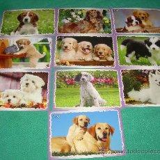 Coleccionismo Calendarios: LOTE DE CALENDARIOS 2011 EXTRANJEROS ANIMALES. Lote 35066658