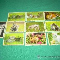 Coleccionismo Calendarios: LOTE DE CALENDARIOS 2011 EXTRANJEROS ANIMALES. Lote 35066682