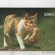 Coleccionismo Calendarios: CALENDARIO EXTRANJERO DE BONITO GATOS DEL AÑO 2005 VER FOTO ADICIONAL. Lote 41482150
