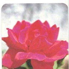 Coleccionismo Calendarios: CALENDARIO DE BOLSILLO 1995 . SAN PABLO . Lote 42642064