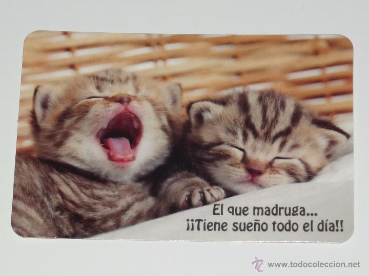 Calendario Foto Gatos Dormidos Con Bonita Frase Año 2015 Sin Publicidad Serie Bo Nº 597 Perros B15