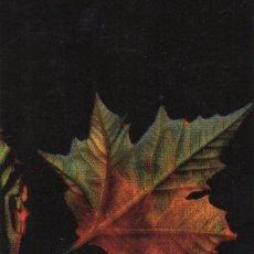 Coleccionismo Calendarios: CALENDARIO BANCO NOVAGALICIA AÑO 2012. Lote 111168151