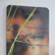 Coleccionismo Calendarios: CALENDARIO PUBLICITARIO 2010. Lote 113676655