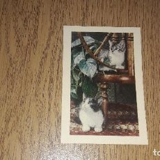 Coleccionismo Calendarios: CALENDARIO DE BOLSILLO....LIBRERÍA GARCÍA VADILLO..BURGOS...1972.... Lote 123713651