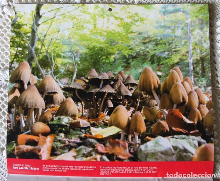 Coleccionismo Calendarios: Calendario de Caixa Sabadell de fotografías naturales (2010) - Foto 4 - 140110126