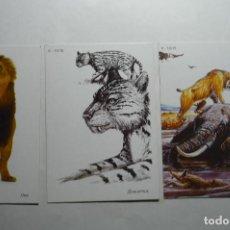 Coleccionismo Calendarios: LOTE CALENDARIOS EXTRANJEROS ANIMALES SALVAJES 2006. Lote 140449886