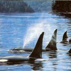 Coleccionismo Calendarios: CALENDARIO DE BOLSILLO DE ARGENTINA - 2009 - ORCAS. Lote 148232550