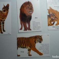Coleccionismo Calendarios: LOTE CALENDARIOS FAUNA .-EXTRANJEROS 2003. Lote 153105606