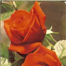 Coleccionismo Calendarios: CALENDARIO DE SERIE - 1979 - REG EMP EDIT Nº 124 - MUEBLES LÓPEZ. Lote 155684994