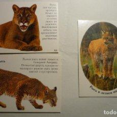 Coleccionismo Calendarios: LOTE CALENDARIOS EXTRANJEROS ANIMALES - 2003. Lote 158233986