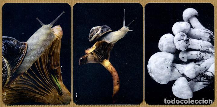 Coleccionismo Calendarios: 9 Calendarios Bolsillo - AMICS DEL COL.LECCIONISME DE BAGA 2019 - Foto 2 - 183521246