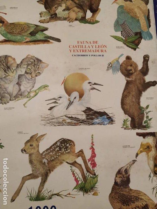 Coleccionismo Calendarios: CALENDARIO FAUNA DE CASTILLA Y LEÓN Y EXTREMADURA - CAJA DUERO 1988 - Foto 2 - 189311056